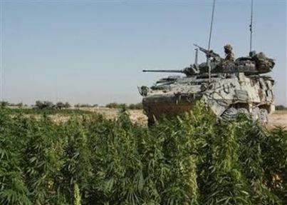 canadian-tank-taliban-weed