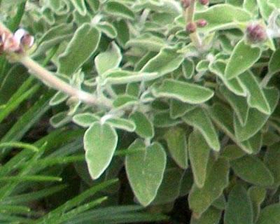 apagorevetai-i-syllogi-votanon-stin-rodo-oristikon.jpg