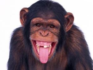 3ce97-monkey200111
