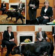 πουτιν μερκελ σκυλος