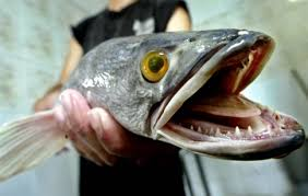ψαρι τερας