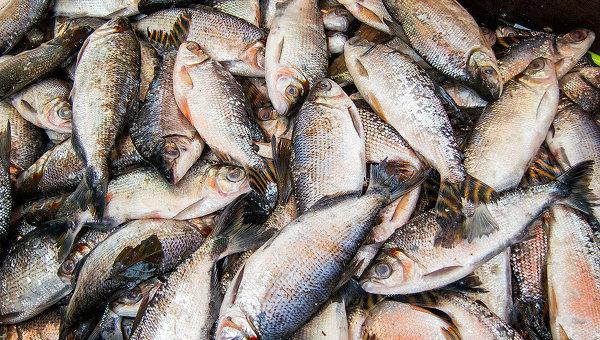 """Συμφωνούν όλοι οι Νεοδημοκράτες ότι """"το Αιγαίο ανήκει στα ψάρια του""""; [ΒΙΝΤΕΟ]"""