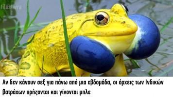 50 τρομερές ελληνικές τρελες φωτογραφίες που θα μοιραστεις με τους Φίλους σου! (20)