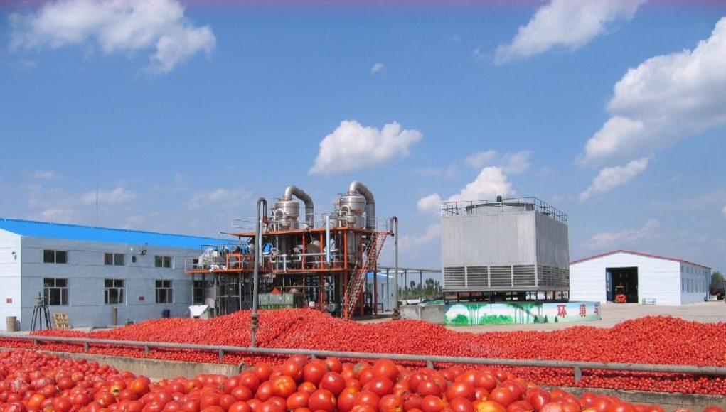 tomata-1021x580
