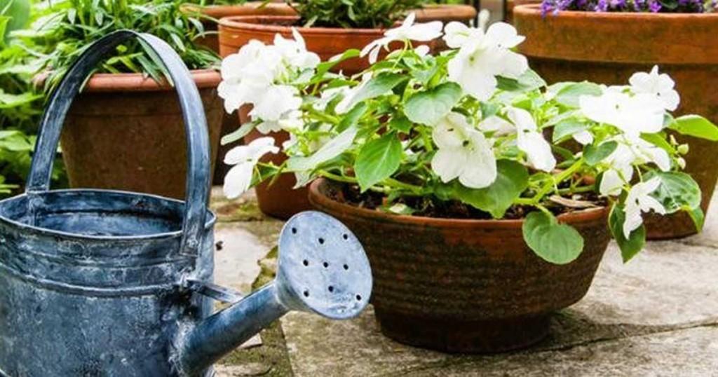 Δείτε πως θα μεγαλώσουν τα φυτά σας πιο γρήγορα!