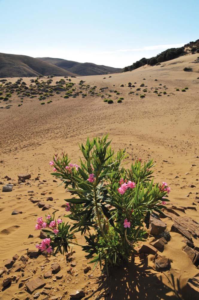 Κι όμως υπάρχει έρημος στην Ελλάδα και είναι η «Σαχάρα» της Λήμνου!