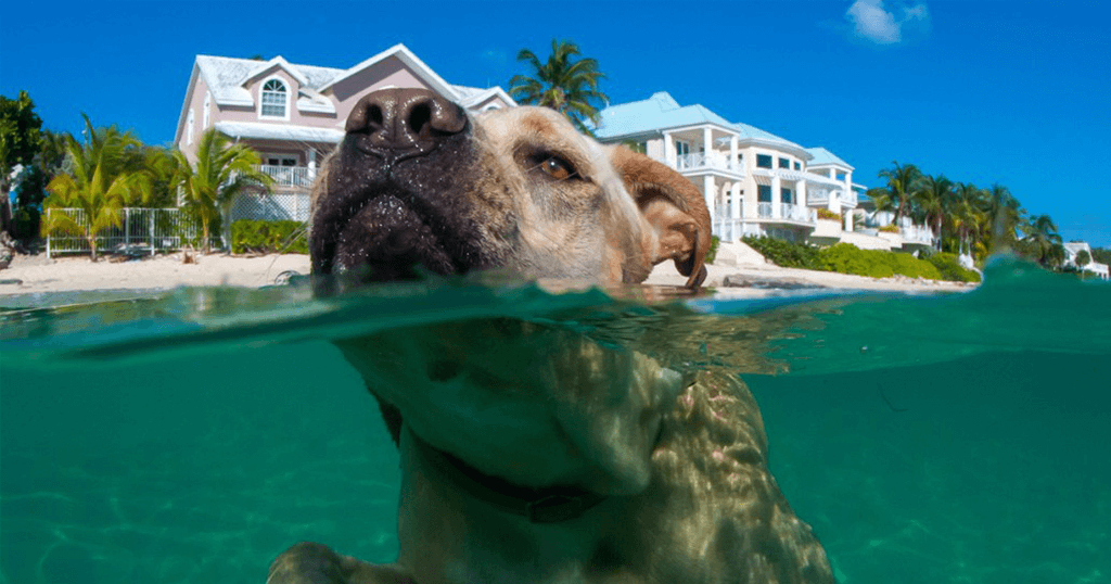 Επιτρέπονται τελικά τα σκυλιά στη θάλασσα;