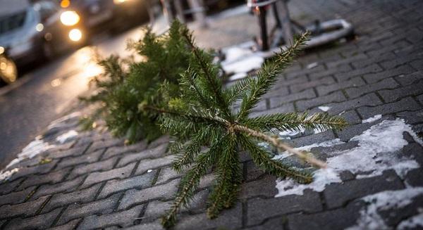 christmas tree real pesmeno