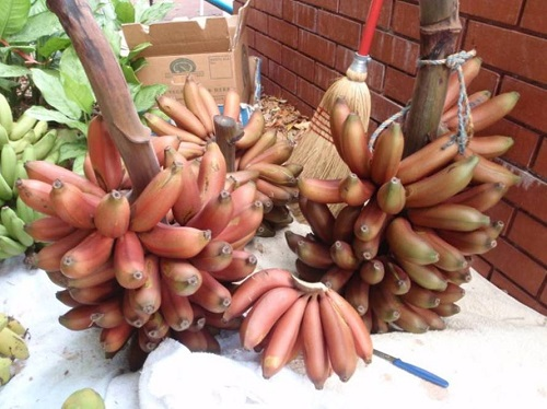 bananas red5