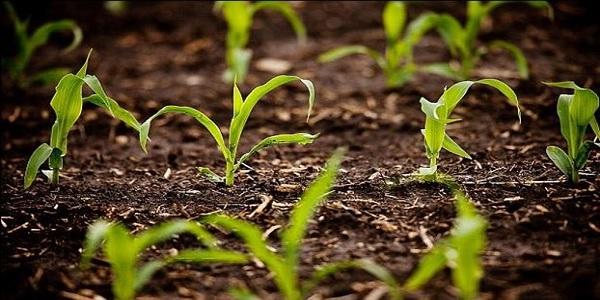 genetika tropopoiimena corns