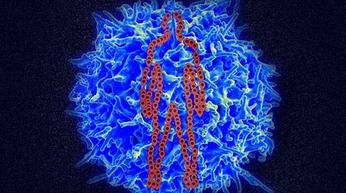 human cells1