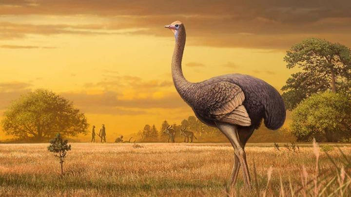 Απολιθώματα γιγάντιων πουλιών ανακαλύφθηκαν σε σπήλαιο της Κριμαίας