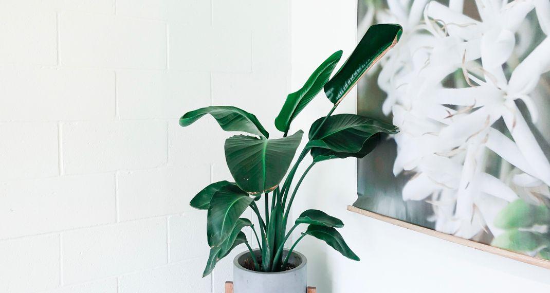 Πέντε φυτά εσωτερικού χώρου που θεωρούνται φυσικά κλιματιστικά -Μειώνουν τη θερμοκρασία του σπιτιού