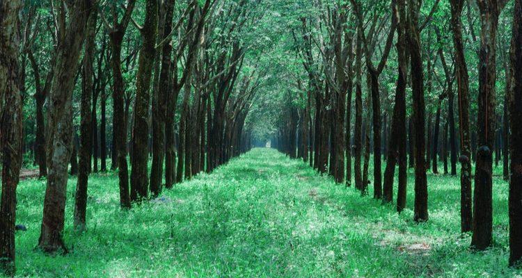 Έρευνα: Ο εκπληκτικός τρόπος που τα δέντρα βοηθούν το ένα το άλλο για να επιβιώσουν στο δάσος.