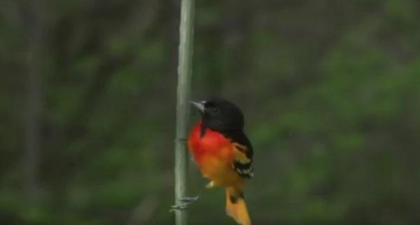 Τα πουλιά «φωνάζουν» SOS για τον πλανήτη (βίντεο)