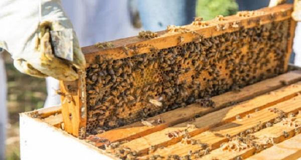 Η παραδοσιακή μελισσοκομία στην Ιερισσό